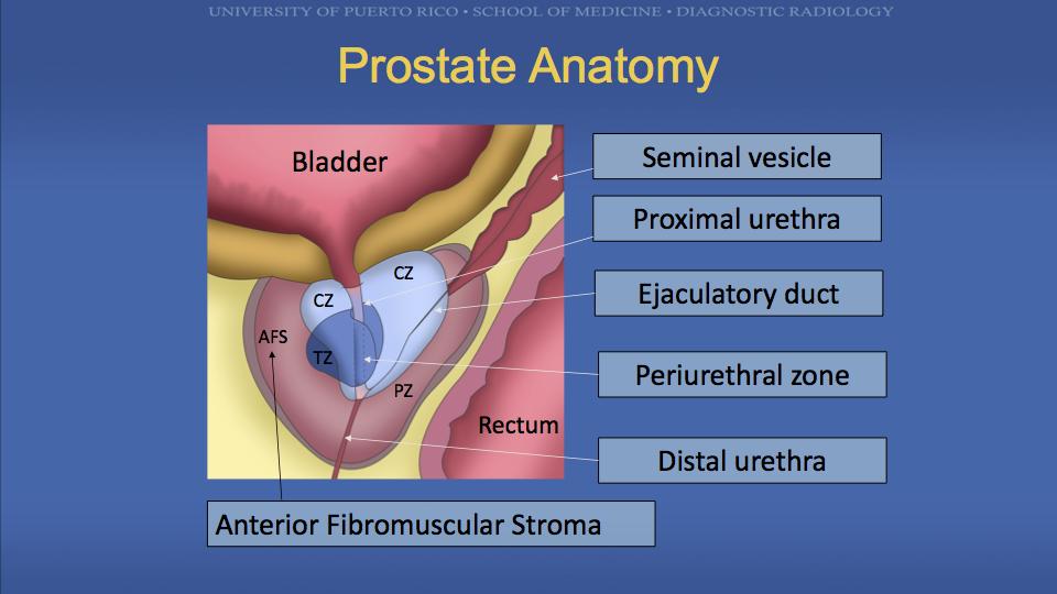 Prostatitis és epehólyag A prosztatitis kezelés otthoni propolis